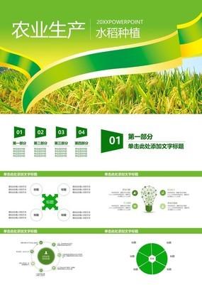 绿色简约大气农产品生产水稻种植PPT模板